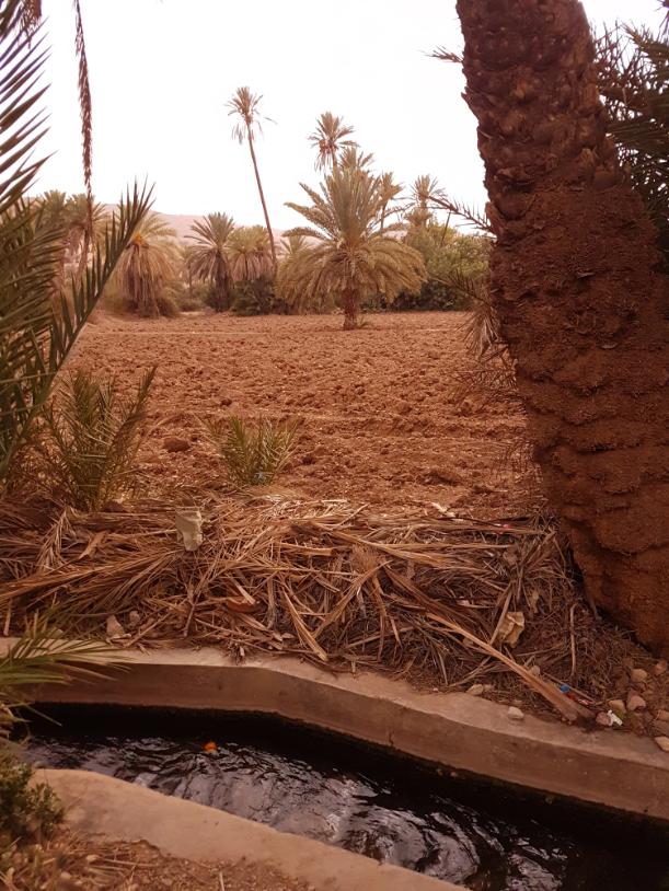 Parcelle agricole, Oasis de TIout